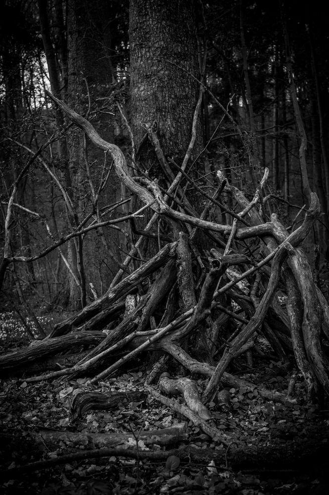 Wald...V