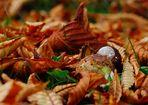 Waldviertler Herbst