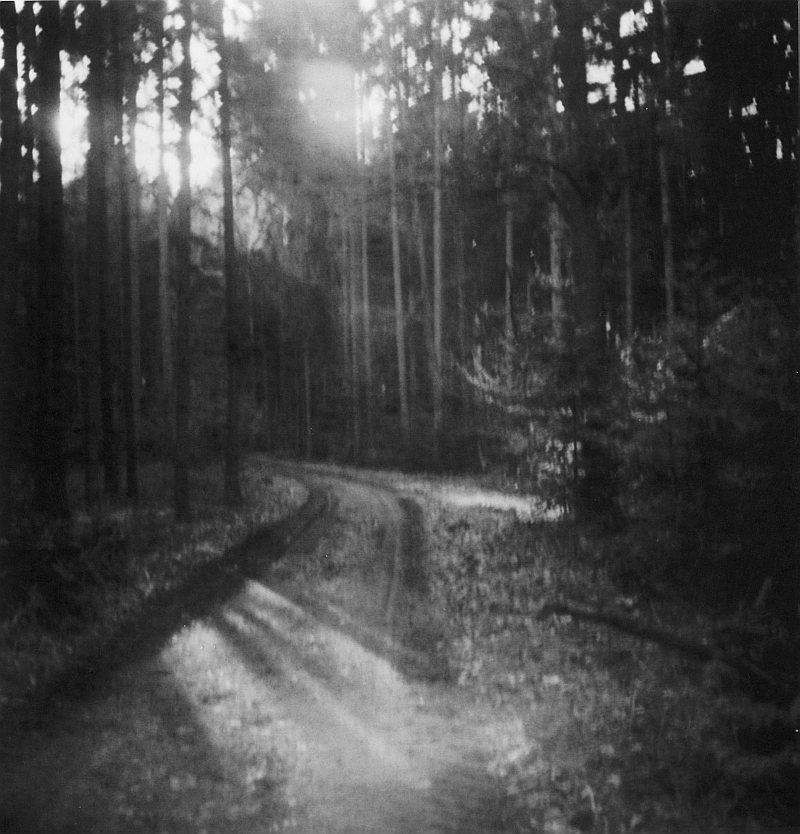 Waldweben