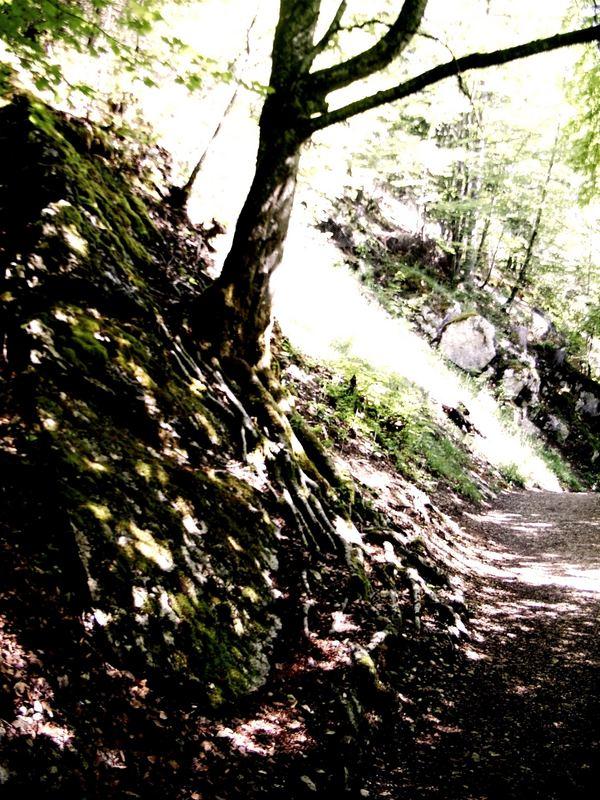 Waldweg (2)