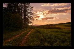 Waldweg am Abend
