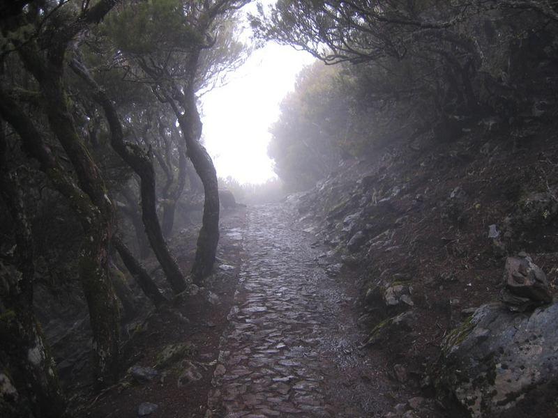 Waldweg auf Madeira