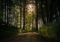Waldweg bei Tagesanbruch