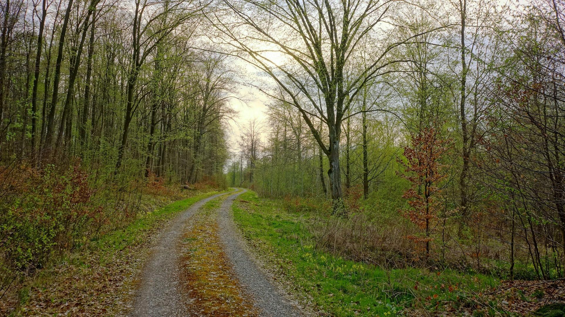 Waldweg (camino forestal))
