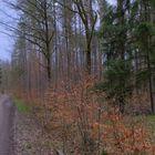 Waldweg (camino por el bosque)