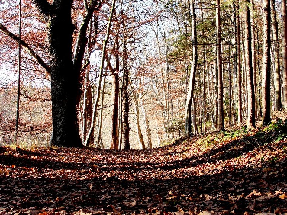 Waldweg, Herbstgang