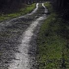 Waldweg im Gegenlicht