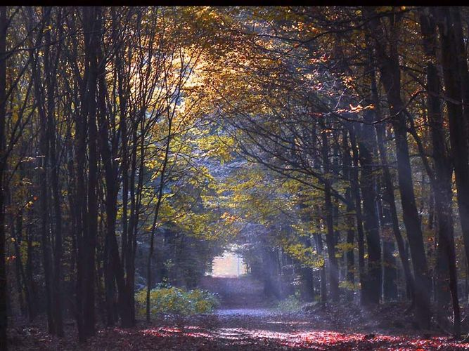Waldweg im Herbst.