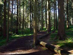 """Waldweg in Richtung Siede Alpe"""