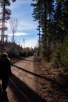 Waldweg Licht und Schatten