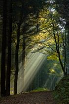 Waldweg lichtdurchflutet