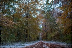 Waldweg mir Schnee