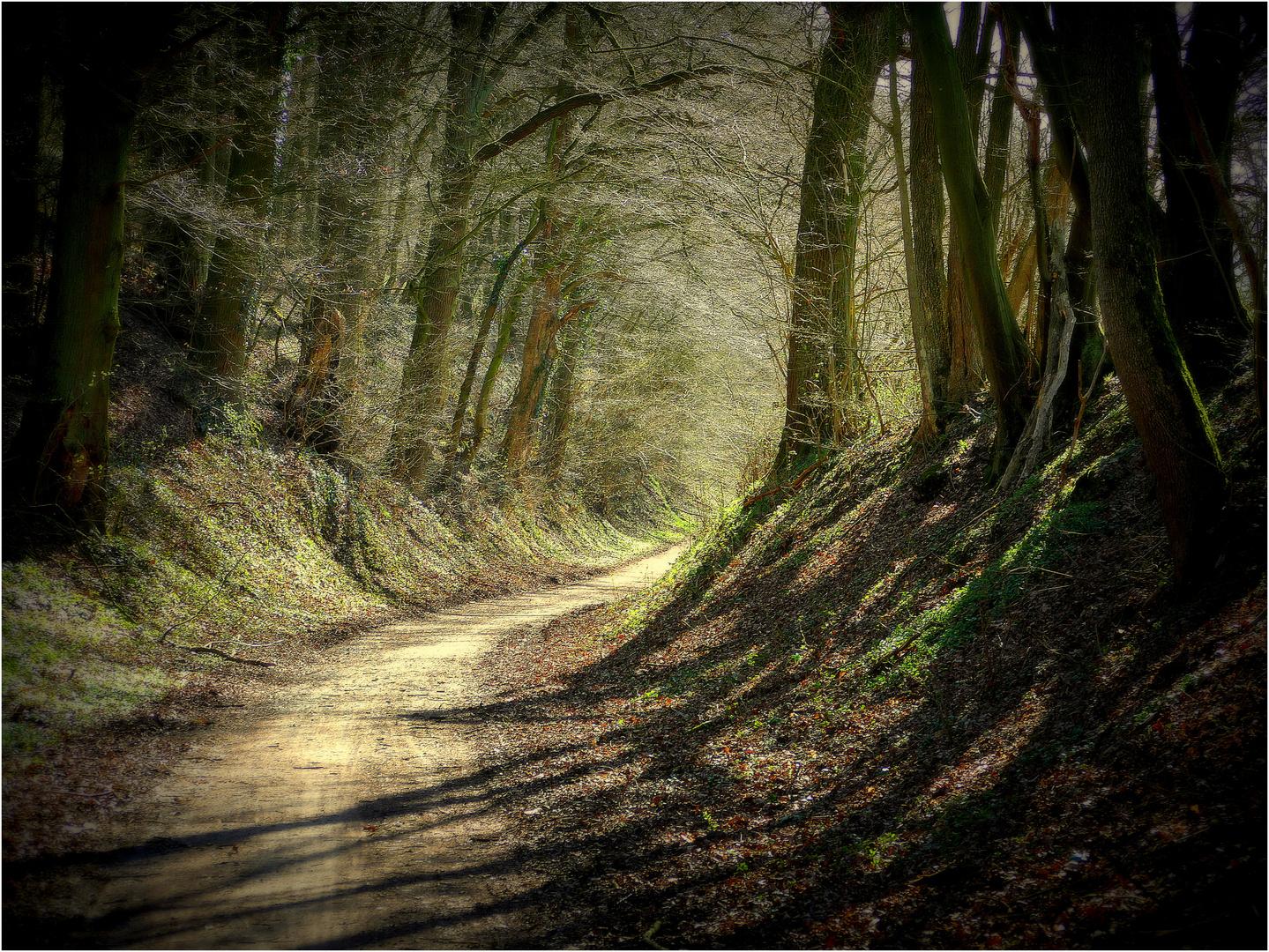 Waldweg mit Durchblick