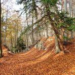 Waldweg mit Eiben