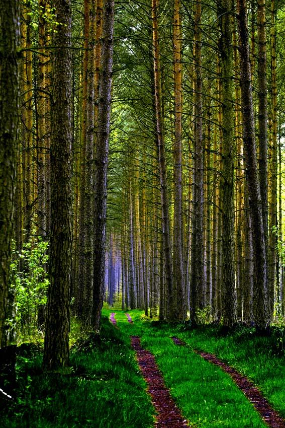 Waldweg mit Licht