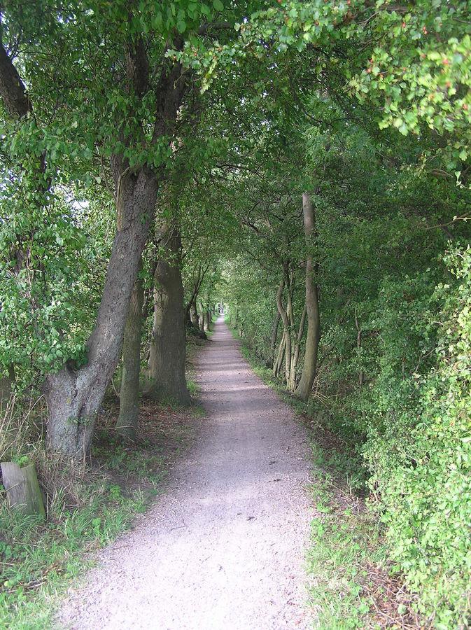 Waldweg-mitten in schweden