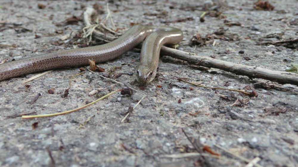 Waldweg - Schlange - Hilfe