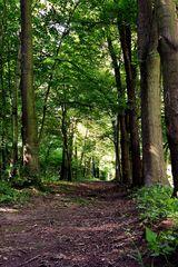 Waldweg - Schwarzatal