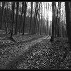 Waldweg s/w
