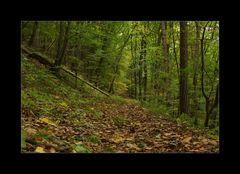 Waldweg zum Zankelstein
