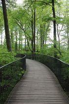 Waldwege.