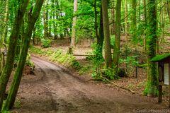 Waldwege im Wildpark Silz