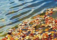 Waldweiher Herbst