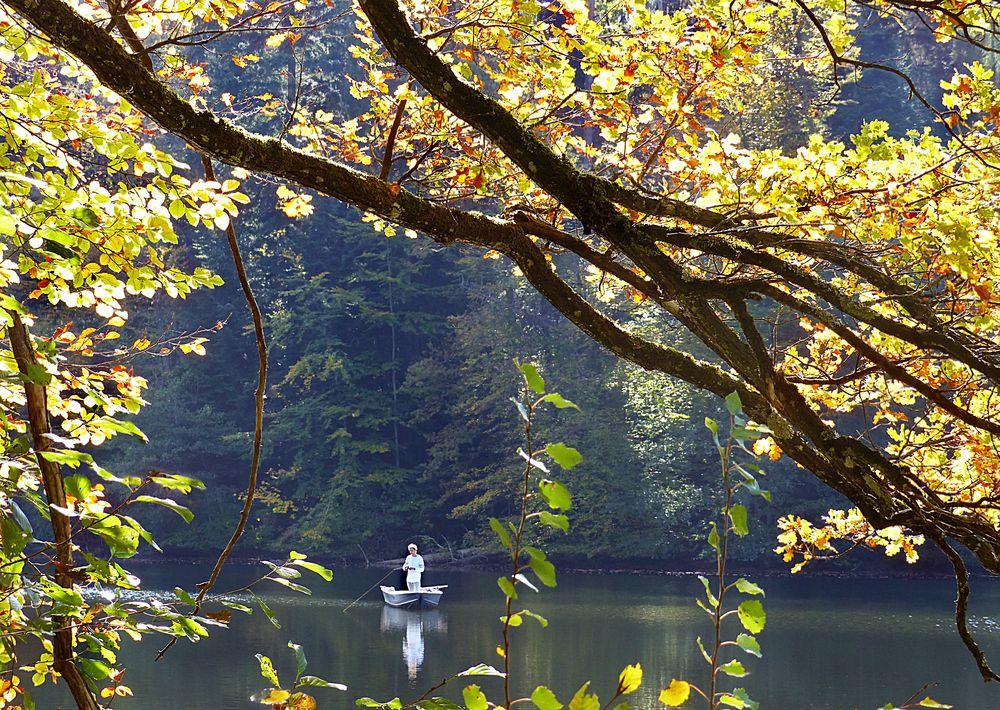 Waldweiher-Idylle
