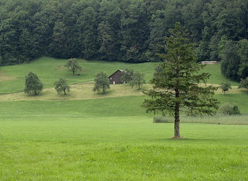 Waldwiese mit Scheune