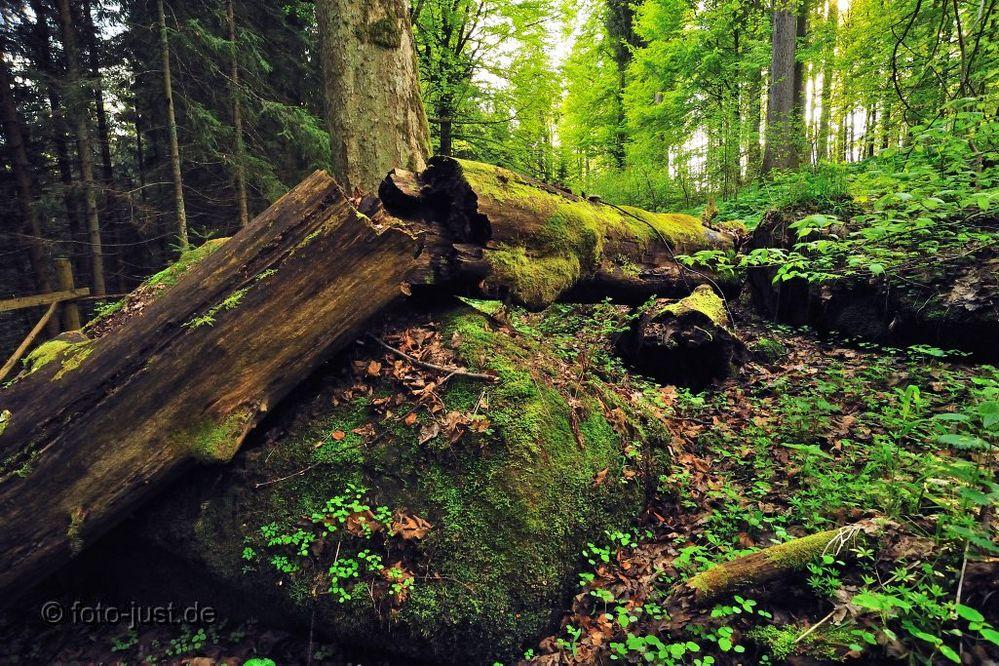 Waldwildnis im Šumava