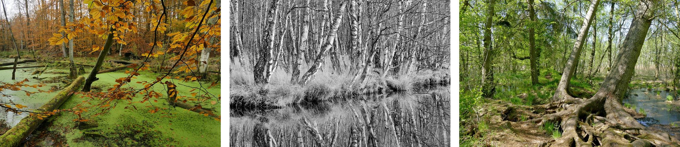 Waldwildnis und verträumtes Moor