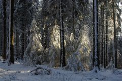 Waldwinter