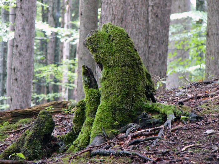 Waldzwerge - getarnt