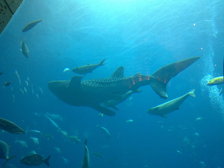 Walhai Aquarium