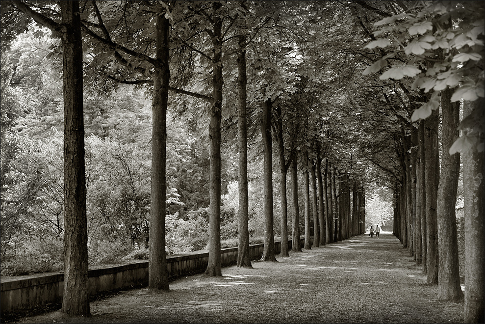 walk in the park