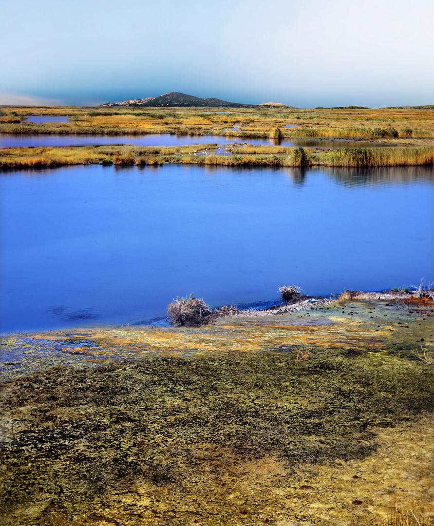 Walk on a marsh  2