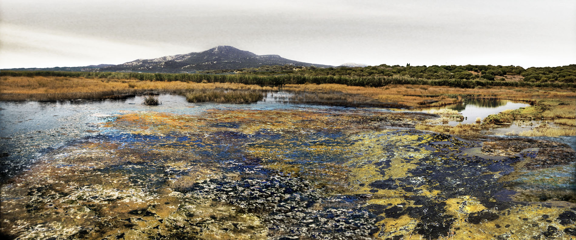 Walk on a marsh