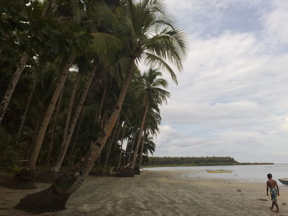 Walk with the Coconuts