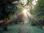 Walking in Lednice Park