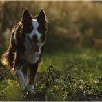 walking in the evening sun