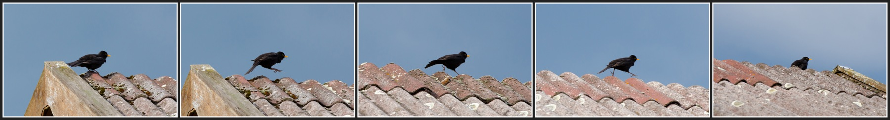 Walking on Roof