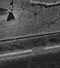 walking under trees