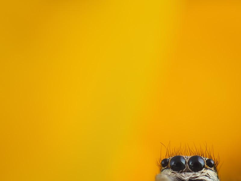Wallpaper - Watching you!