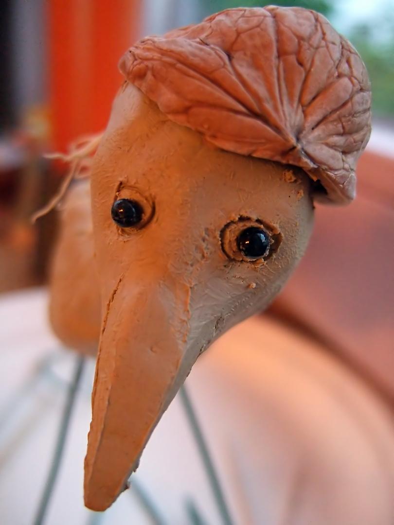 walnussvogel