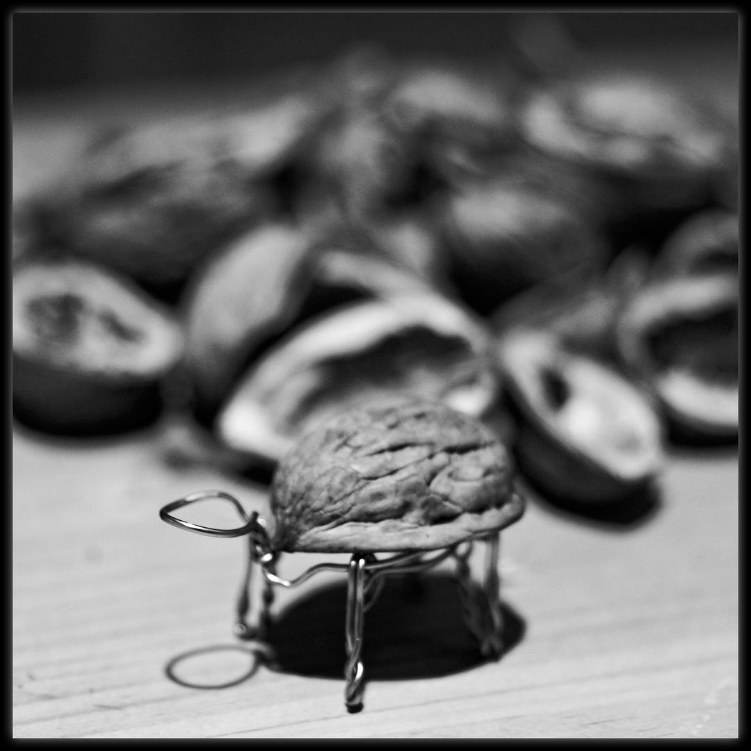 walnut-turtle