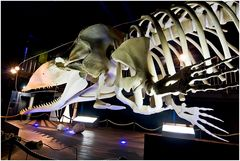 Waloseum Ostfriesland, Skelett eines Pottwals, der 2003 gestrandet ist.