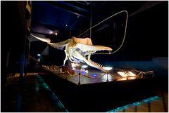 Waloseum Ostfriesland, Skelett eines Pottwals, der 2003 gestrandet ist