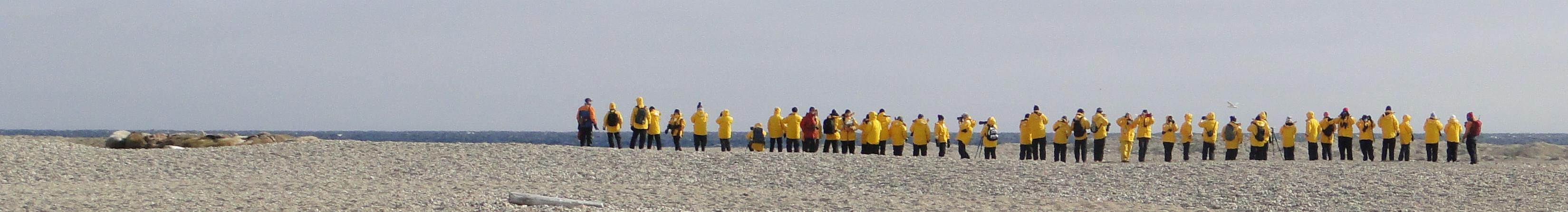 Walrosstouristen