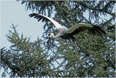 Walsrode Vogelpark 12