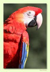 Walsrode Vogelpark 15